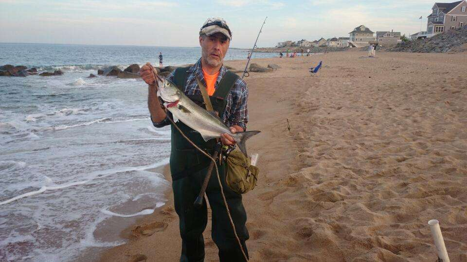 First bluefish